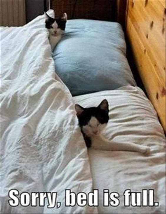 Funny picture of cat's being a jerk and taking over you bed, sorry no room for you.