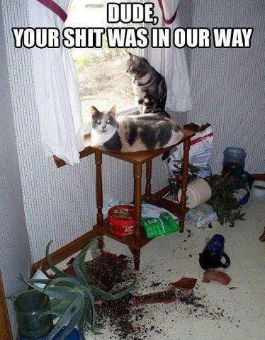 Funny picture of jerk cats that made a mess to get the view from the window.