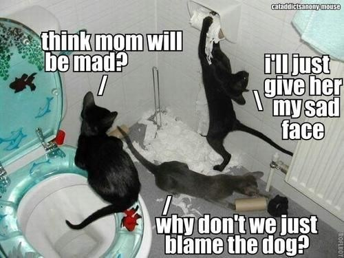 Cat - cataddictsanony.mouse think mom will be mad? iljust give her my sad face why don't we just blame the dog? ROFLBOT