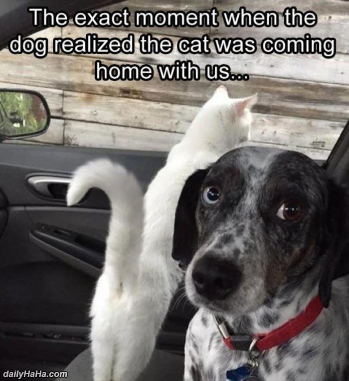 Dog - The exact moment when the dog realized the cat was coming home with us.co. dailyHaHa.com