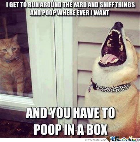 Photo caption - IGET TO RUNAROUND THE YARD AND SNIFF THINGS AND POOP WHERE EVERIWANT AND YOU HAVE TO POOP IN A BOX MemeCentera memecenter.com