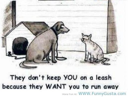Cat - They don't keep YoU on a leash because they WANT you to run away www.FunnyGusta.com More Fun At