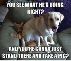 Dog - YOU SEE WHAT HE'S DOING RIGHT? AND YOURE GONNA JUST STAND THERE AND TAKE A PIC?