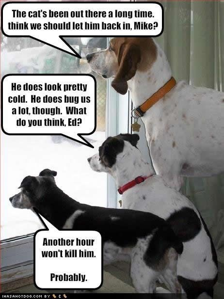 Dog - The cat's been out there a long time. think we should let him back in, Mike? He does look pretty cold. He does bug us a lot, though. What do you think, Ed? Another hour won't kill him. Probably IHASAHOTDOG.COM BY