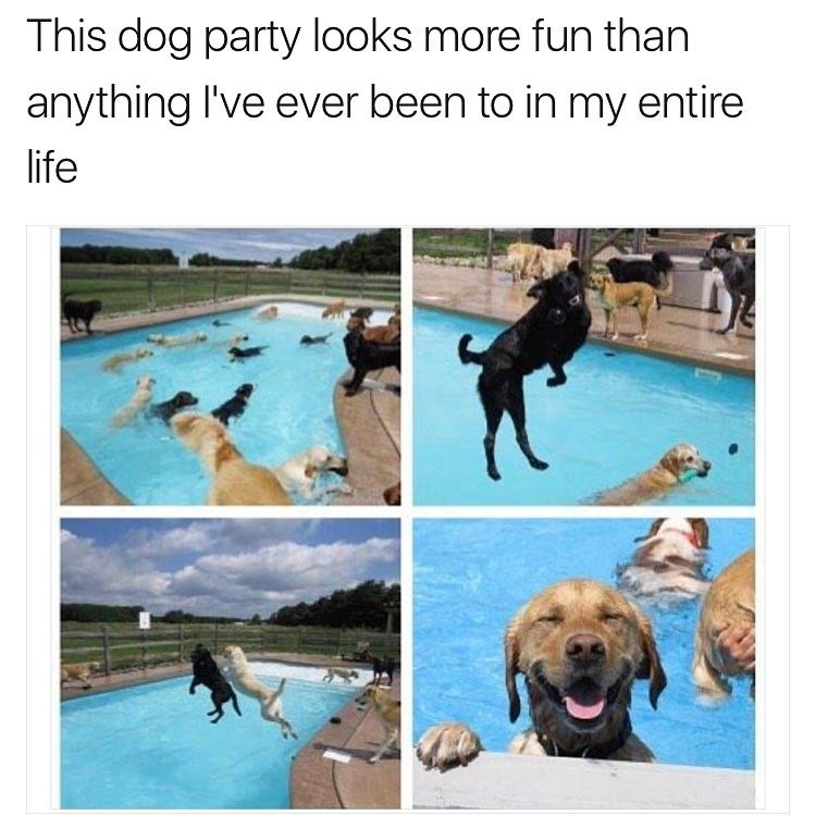 Funny meme showing photos of a dog pool party.