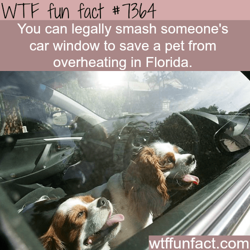 Dog - WTF fun fact #1B104 You can legally smash someone's car window to save a pet from overheating in Florida. wtffunfact.com
