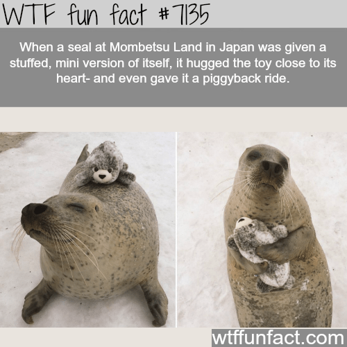Terrestrial animal - WTF fun fact # 135 When a seal at Mombetsu Land in Japan was given a stuffed, mini version of itself, it hugged the toy close to its heart- and even gave it a piggyback ride. wtffunfact.com