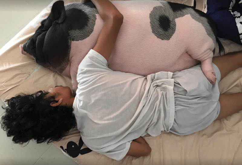 a guy sleeping with his giant tea cup pig