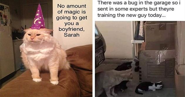 caturday animal cat memes