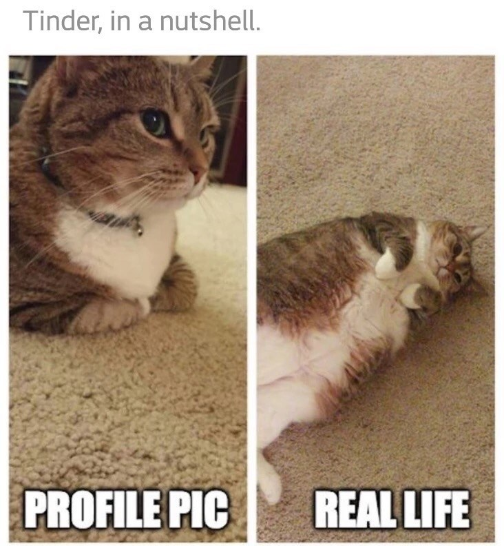 Funny meme of a cat showing the difference between a Tinder profile pic and real life.