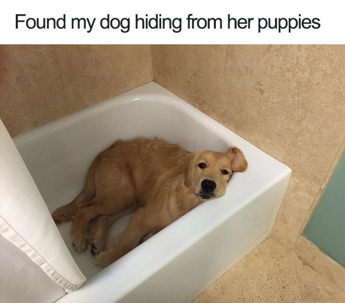 Funny Monday memes - meme of a dog hiding in the bathtub to get away from her puppies.