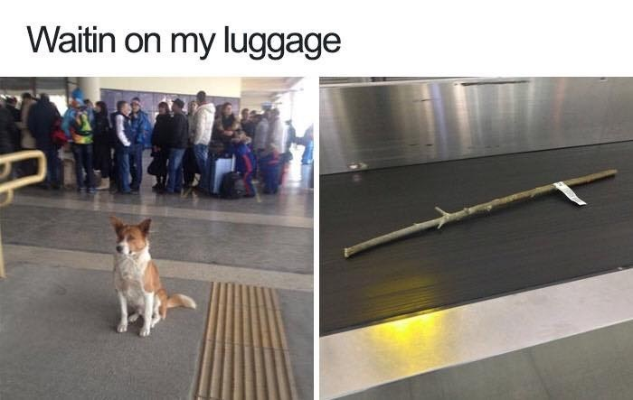 Funny meme of a dog waiting at the airport and a luggage conveyor belt that has his stick.