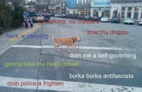 MEme about dog walking itself, funny, the dog is an anarchist.