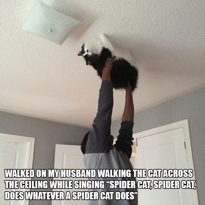 "Ceiling - WALKED ON MY HUSBAND WALKING THE CAT ACROSS THE CEILING WHILESINGING ""SPIDER CAT,SPIDER CAT DOES WHATEVERASPIDER CAT DOES"