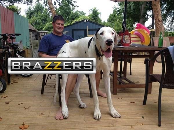 Dog - BRAZZERS
