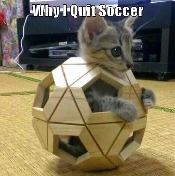 funny cat memes cat soccer - 9032948736