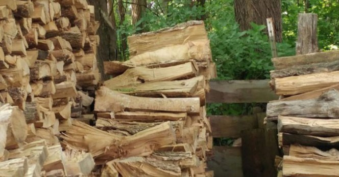 Picture of a hidden cat among firewood and trees