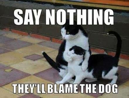 Cat - SAY NOTHING THEY'LLBLAMETHE DOG