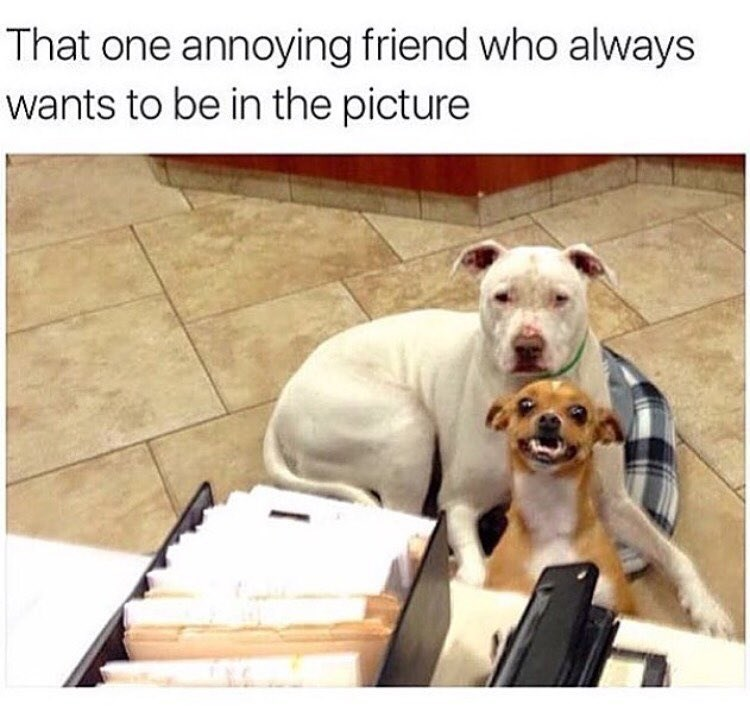 Dog - That one annoying friend who always wants to be in the picture