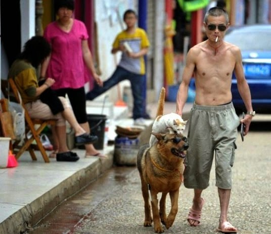 Cat riding the back of a dog in China.