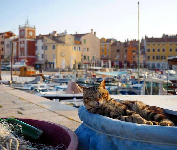 Cat napping in the setting sun in Croatia.