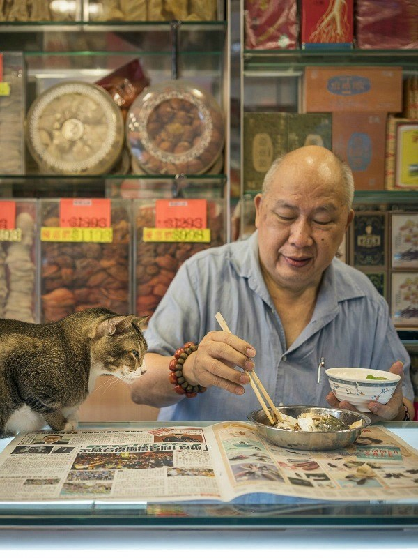 Cat trying to score some dinner in Hong Kong.