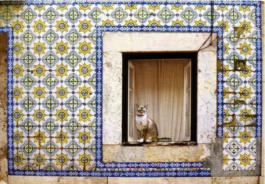 Cat in the window in Portugal.