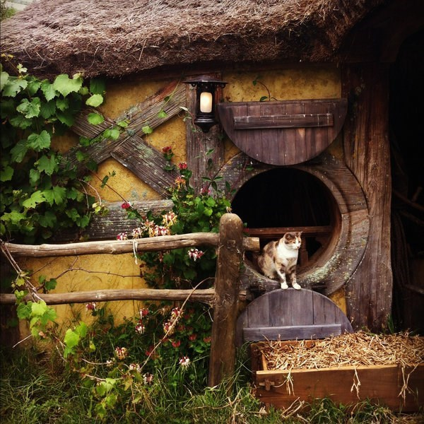 Cat in a hobbit house in New Zealand