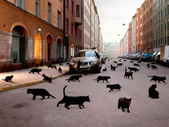 Black cats all over the road in Norway.