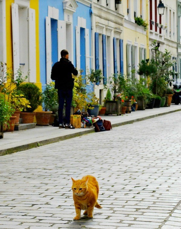 Cat on the streets of France.