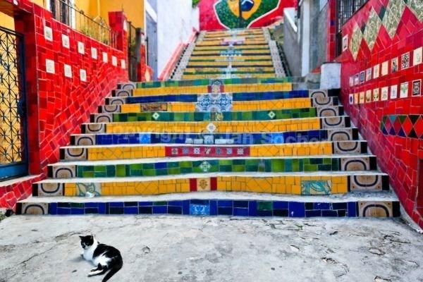 Cat in Brazil.