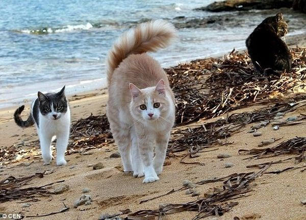 Beach cats in Sardinia walking to the camera.