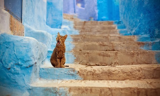 Morocco cat looks surprised.