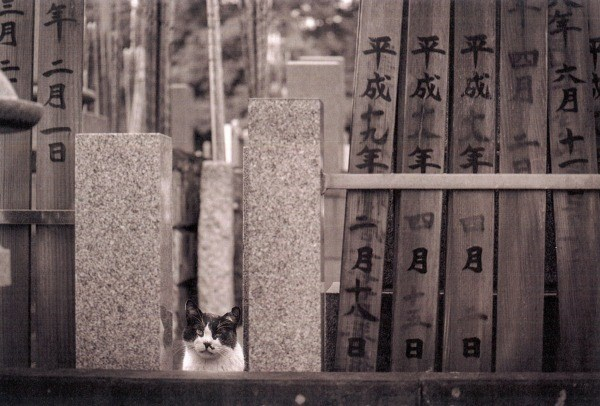 Cat by wooden signs in Japan.
