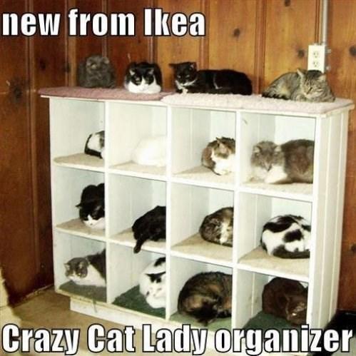 Shelf - new from Ikea Crazy Cat Lady organizer