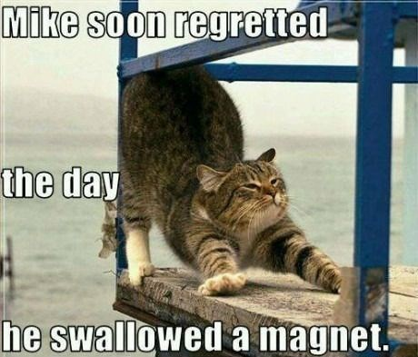 Cat - Mike soon regretted the day he swallowed a magnet.