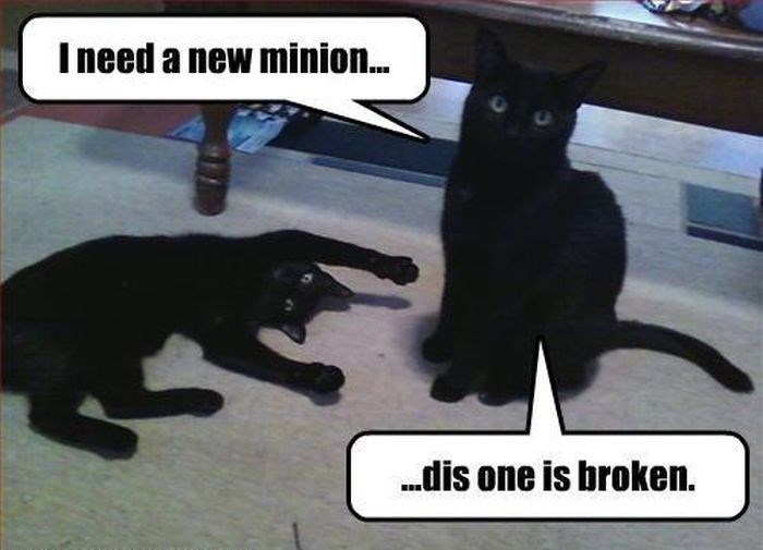 Black cat - I need a new minion.. dis one is broken.