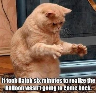Cat - Ittook Ralph sixminutes to realize the balloon wasn't going to come back
