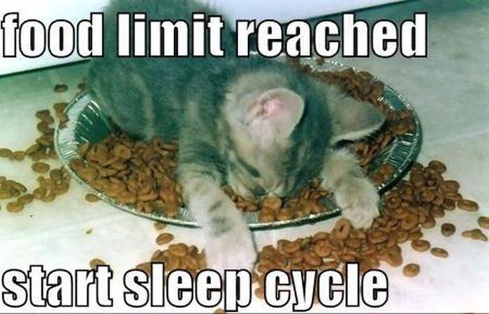 Organism - food limit reached start sleep cycle