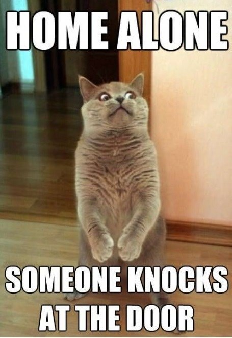 Cat - HOME ALONE SOMEONE KNOCKS AT THE DOOR