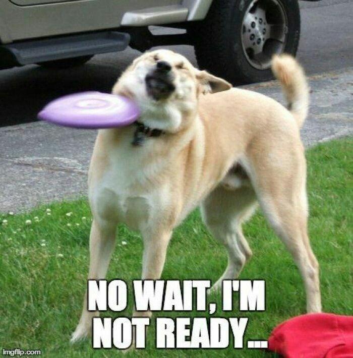 Dog - NO WAIT, TM NOT READY imgfip.com