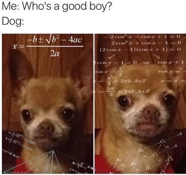 Nose - Me: Who's a good boy? Dog: 2 cON Cos 2 cos +cos r bt Nb- 4ac 1)(cOs+1) (2 coN = X cos + or CON cOS CON 2xk. keZ 27, kZ 3 C B 24