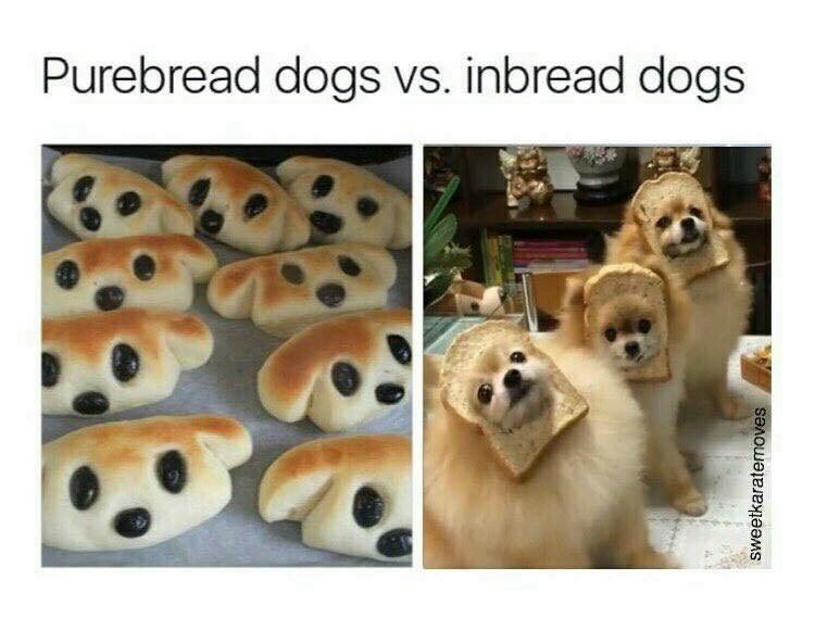 Pure bread dogs - photo of dog shaped pastries - inbread dogs - photo of dogs with their faces inside bread. Funny meme / funny pun.