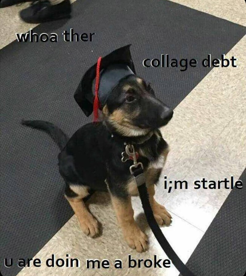 Funny meme of dog with graduation outfit on, expressing the anxieties of student debt from college.