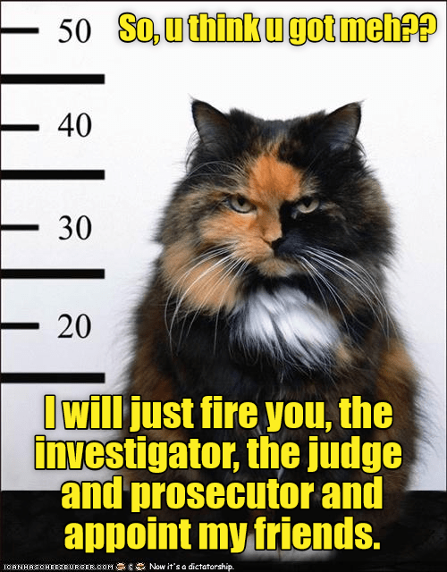Arrest cat - the catfather