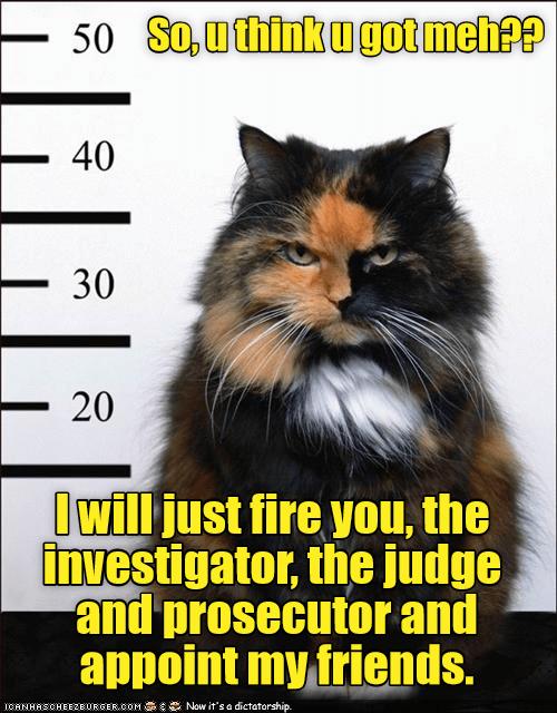 Arrest cat - the catfather