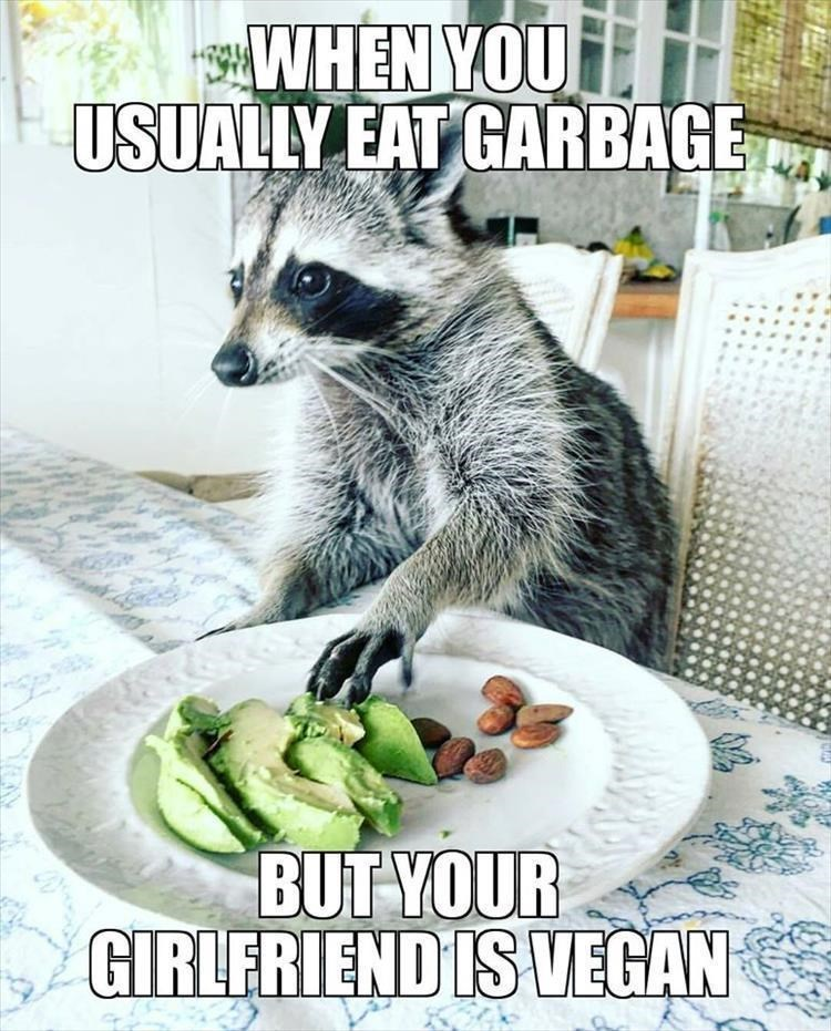 Photo caption - WHEN YOU USUALLY EAT GARBAGE BUT YOUR GIRLERIEND IS VEGAN