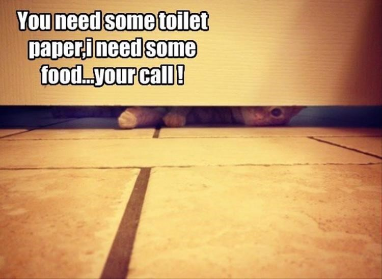 Floor - You need some toilet paperineed some food..your call!