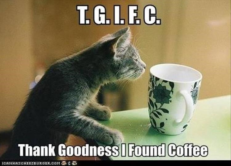 Cat - T.G.I.F. C. Thank GoodnessI Found Coffee IORNHASOREEZEURGER.COM