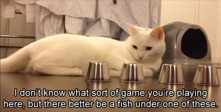 Cat - I don't know what sort of game you're playing here, but there better be a fish under one of these.